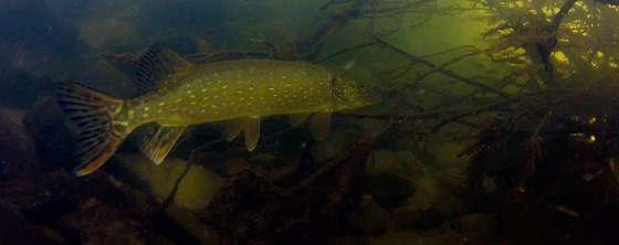 Как найти рыбу на большом водоёме
