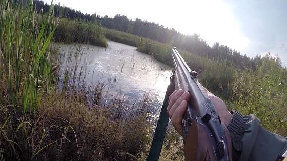 Охота на уток на болоте