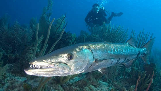 Подводная охота на разных рыб