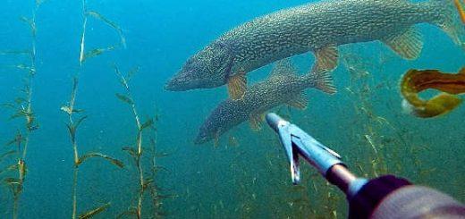 Подводный мир Саян