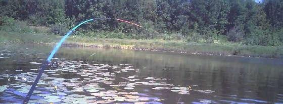 Ловля с лодки в кувшинках