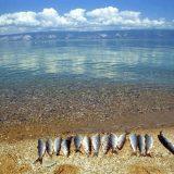 Как ловят рыбу на Байкале