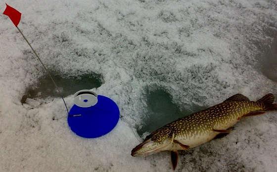 Ловля щуки на жерлицы со льда