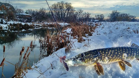 Ловля щуки в снег
