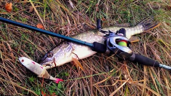 Ловля щуки на спиннинг на мало-речке осенью
