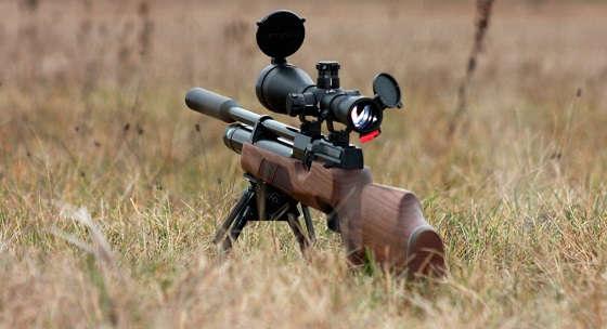 охота на фазана с ПСП ВОЗДУШКОЙ