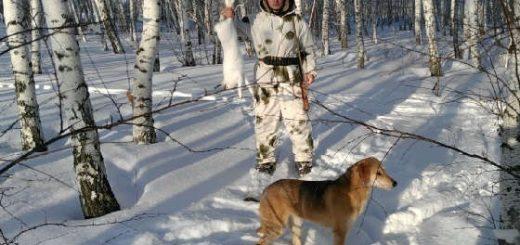 Охота с русскими гончими на зайца и тропление