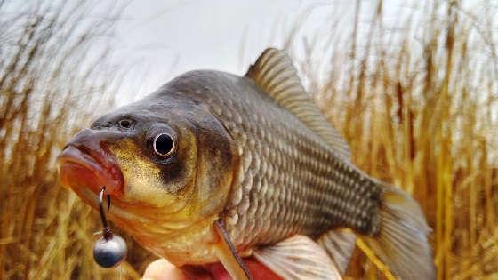 Рыбалка на карася поздней осенью