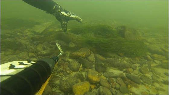 Трофейная подводная охота на Енисее
