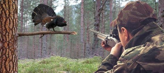 Охота на глухаря осенью с Напарником