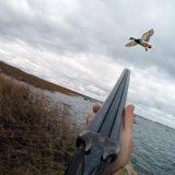 Охота на утку с подхода в октябре