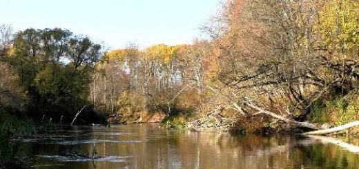 Ловля щуки на закоряженной реке
