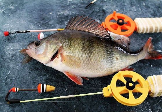 Рыбалка на окуня на тундровых озерах
