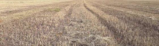 Как найти зайца русака в чистом поле