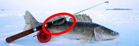Ловля СУДАКа на РЫБИНСКОМ водохранилище со льда