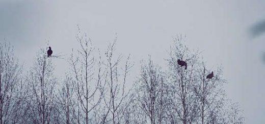 Охота на тетерева осенью: Сайга 308 исполнение 61