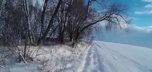 Тропление зайца по первому снегу