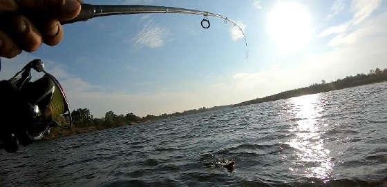 Твичинг Осенью на Диком Озере