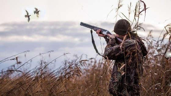 Удачная охота на утку в Московской области 2020