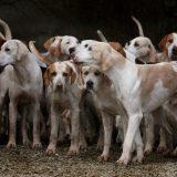 Пять главных правил при выборе собаки