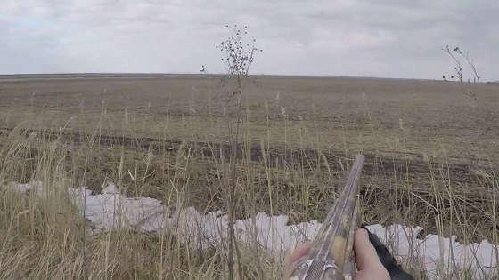 Охота на зайца на Кубани