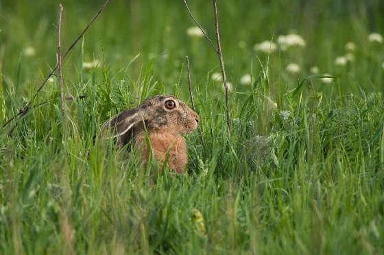 Для чего зайцы делают тропы?