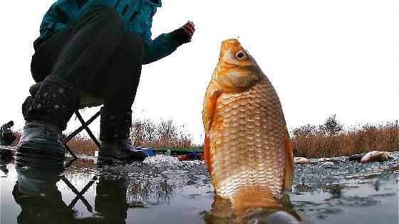 Ловля карася со льда на подвеску с мормышкой