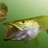 Два МИФА о клёве рыбы