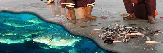Ловля рыбы на мормышки в Тавричанском Лимане