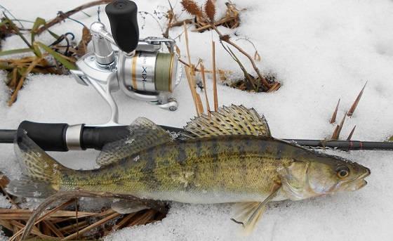 Микроджиг зимой: как поймать на спиннинг