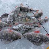 Зимняя рыбалка на блесну