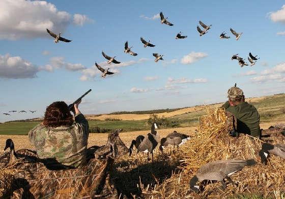 Охота на гуся под Саратовом