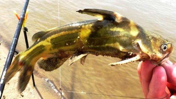 Ловля рыбы на уху