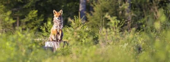 С 2021 года изменятся правила охоты