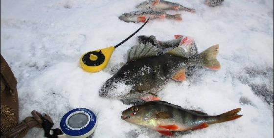 Ловля ОКУНЯ со Льда на Мормышку и Безмотылку
