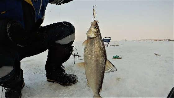 Рыбалка на сига зимой