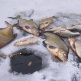 Зимняя рыбалка на рыбу лещёвой породы