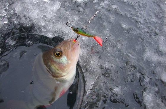 балансир для ловли хищной рыбы зимой