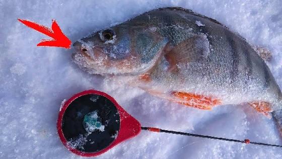 Зимняя рыбалка на мормышку в глухозимье