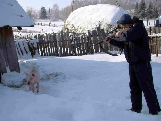 Мелкашка против свиньи