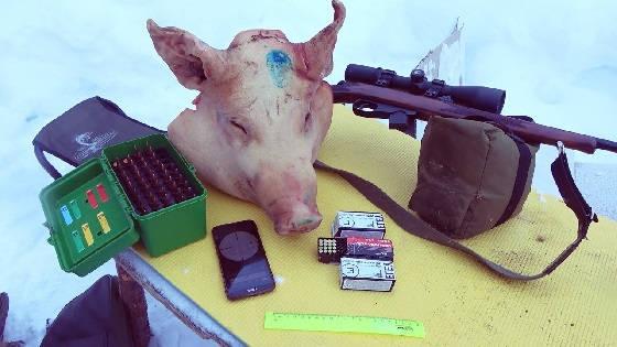 Мелкашка 22LR и Сайга-308 против свиньи