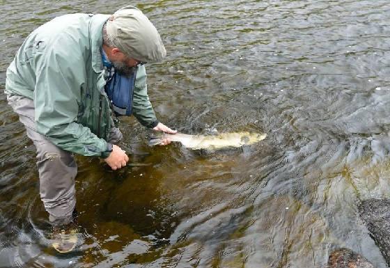 Зачем отпускать пойманную рыбу?