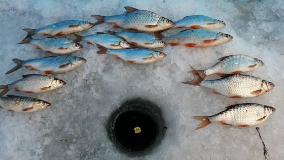 Ловля плотвы зимой на реке 2021