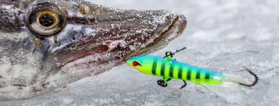 Надежный поводок для зимней рыбалки