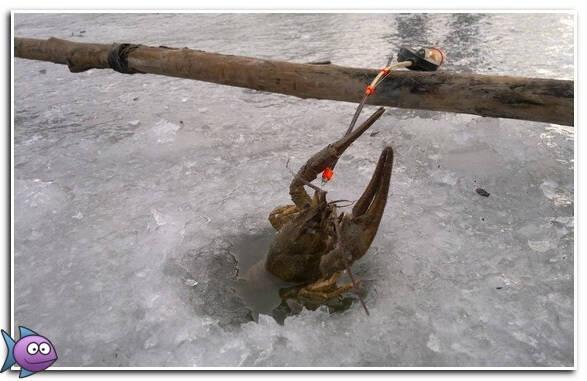 Ловля РАКОВ в ЯНВАРЕ