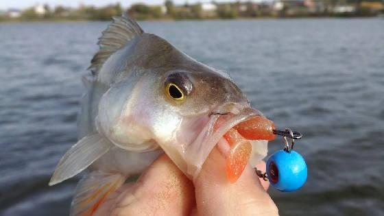 Рыбалка с.Цветное