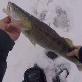 Рыбалка на СУДАКА с ЭХОЛОТОМ в режиме флешер
