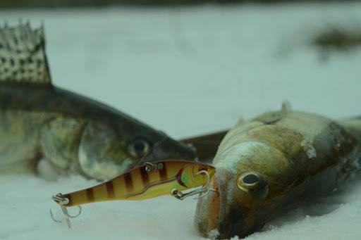 БЕЗОТКАЗНЫЙ ВИБ для пассивной рыбы