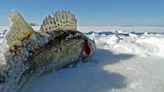 рыбалка на водохранилище зимой