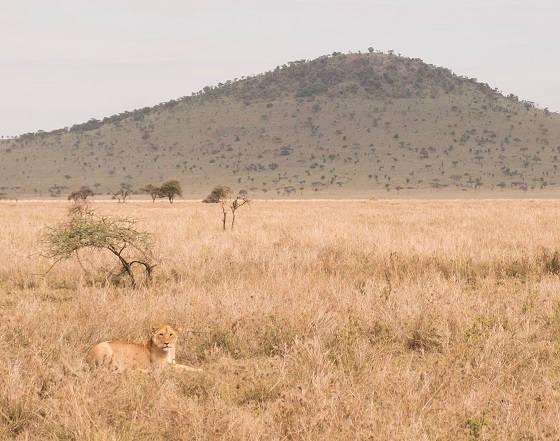 Сафари в диком раю Африки